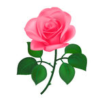 pink-rose-clip-art-canstock11979200