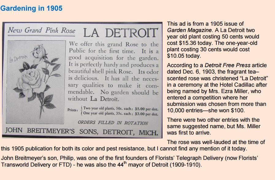 La Detroit_rose
